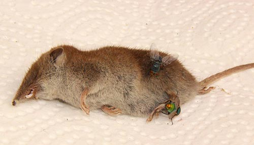 Carcass Removal Stoke on Trent