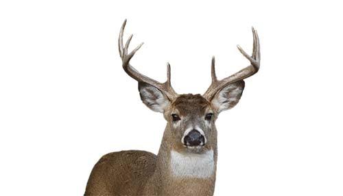 Deer Control Services