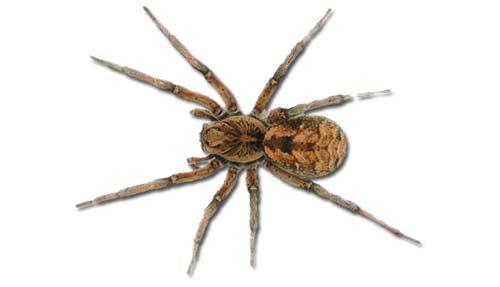 Spider Control Stoke on Trent