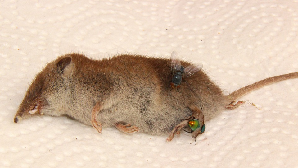 Dead Animal Removal Stoke on Trent