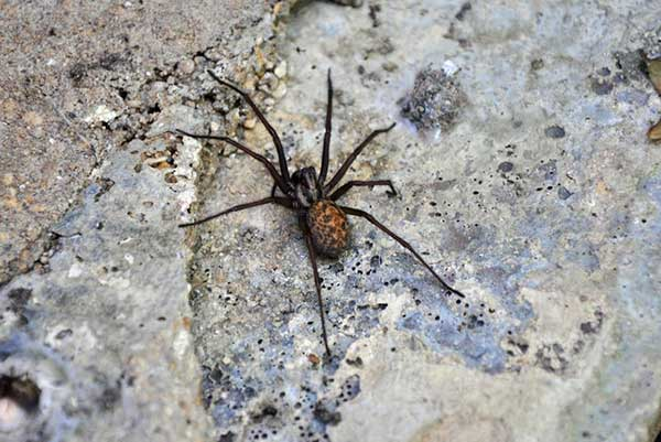 Spider Removal Stoke on Trent